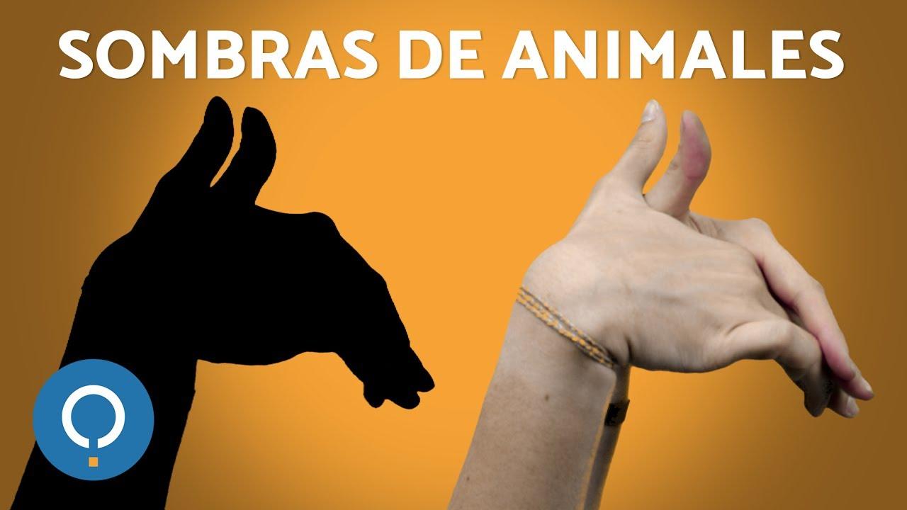 SOMBRAS CHINAS PARA NIOS Cmo hacer figuras de Animales YouTube