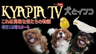 みんなの紹介動画です。犬とインコキャピア tv ・おもしろ可愛い犬・ア...