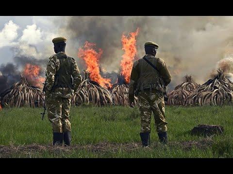 Корреспондент (Украина): шестая волна вымирания. Человек убил 60% животных. Корреспондент, Украина.
