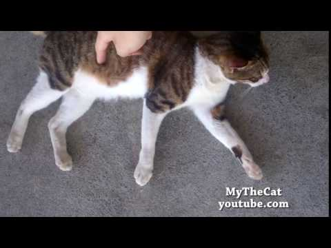Funny cat get angry when I tickled her