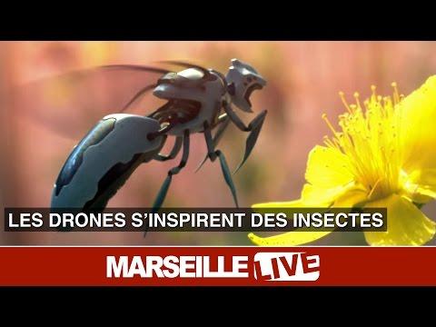 BeeRotor, un drone inspiré des insectes