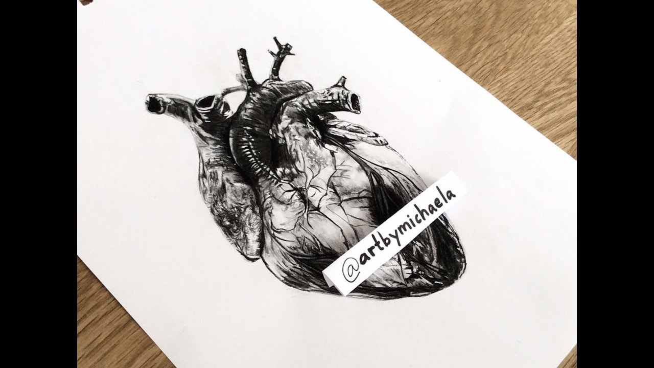 drawing a human heart - youtube, Muscles