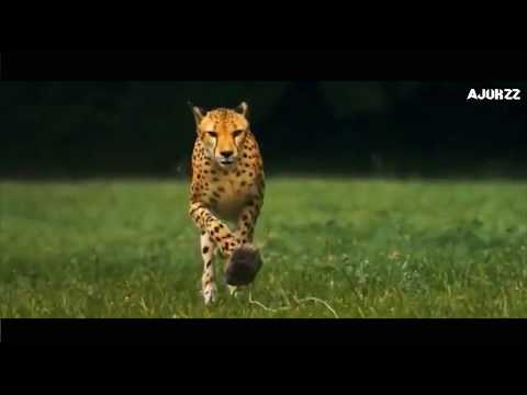 Motivational Video   This Will Change Your Mind   Whatsapp 30 Sec Video  