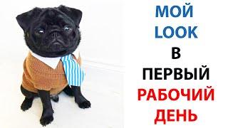 Мемы с собаками 2021  Смешные животные  Мопсы подборка #shorts