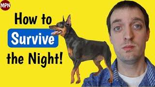 First Night Home with Your Miniature Pinscher Puppy: What You Need to Know!