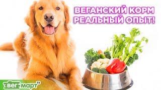 Реальный опыт кормления домашних животных ВЕГАНСКИМ КОРМОМ!