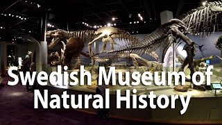 Swedish Museum of Natural History, Stockholm. Zhiyn smooth Q test with gopro3