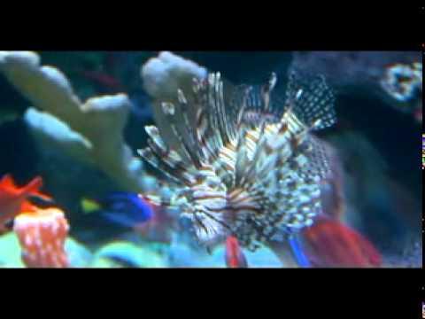 sea life kansas city aquarium media preview day youtube. Black Bedroom Furniture Sets. Home Design Ideas