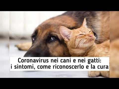 Coronavirus Nei Cani E Nei Gatti: I Sintomi, Come Riconoscerlo E La Cura !!