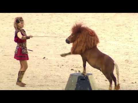 Милые пони и красивые лошади в этой видео-подборке