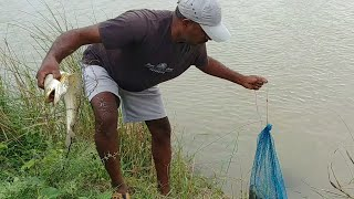 Fish hunting || Catching For wallago fish & tilapia fish,baam fish
