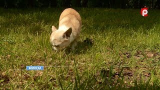 О перспективах закона о регистрации домашних животных