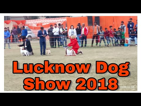 Lucknow Dog show 2018 in police line