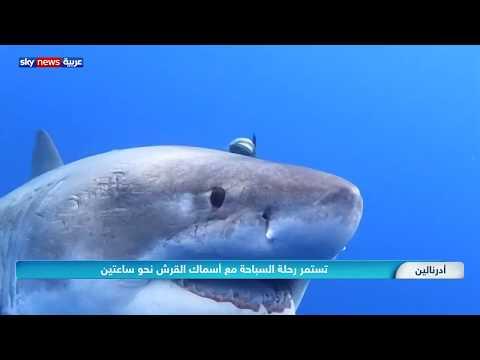 مغامرة السباحة مع أسماك القرش مليئة بالإثارة  - 08:59-2020 / 3 / 29