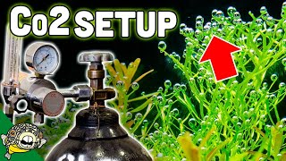How To Set Up Aquarium Co2 System - The EASY Way