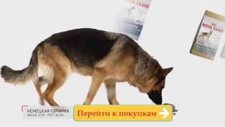 Полезный корм для собак и кошек Royal Canin. Интернет магазин Anyzoo.ru(, 2016-01-28T12:07:25.000Z)