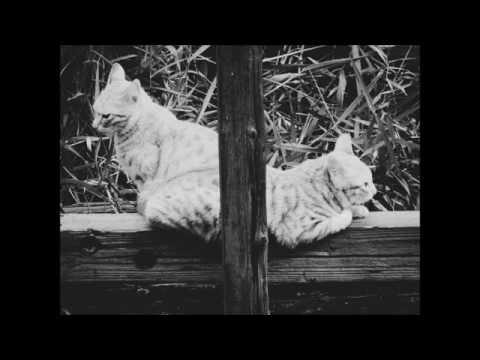 Frech & Koch - Affenzirkus (Original Mix)