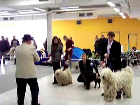 Klubová výstava Pannonia Klubu - Club dog show Pannonia Klub