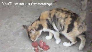 Кошка тащит мясо к себе домой для котят.Кормим бездомных кошек.