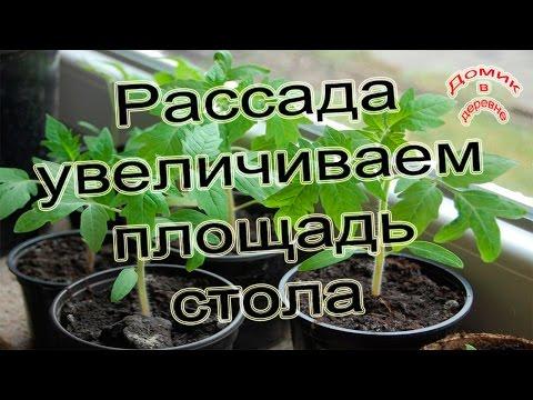 Сбербанк Лесная - телефоны и адреса (Новгородская область)