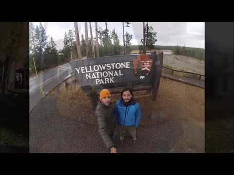 Wildlife in Yellowstone National Park, October 2014