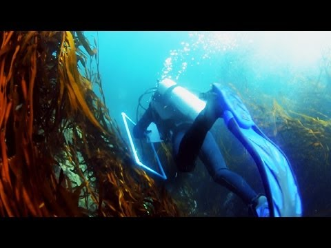 #86 Marine Conservation - Living Atlas Chile