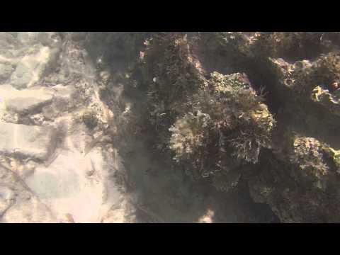 Florida Key West Snorkeling - Dry Tortugas National Park
