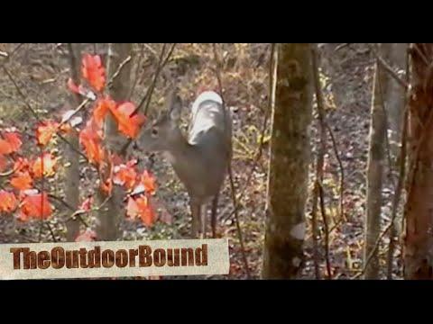 Meat Hunter: Whitetail Deer Vs 12 Gauge Slug