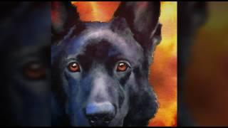 СПАСЕНИЕ бездомной собаки. ЧЕРНАЯ НЕМЕЦКАЯ ОВЧАРКА  Блэк в добрые руки!!!! Мокрый нос