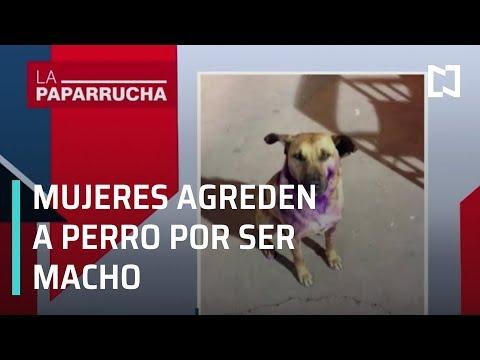 Mujeres agreden a perro por ser macho, en la paparrucha del día