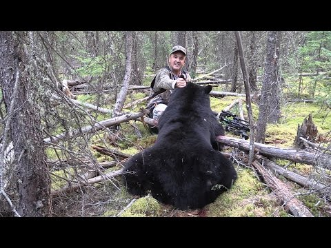 Big Crossbow Bear