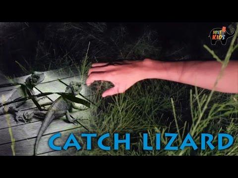 SĂN BẮT KÌ NHÔNG, TẮC KÈ BAN ĐÊM How to catch lizard