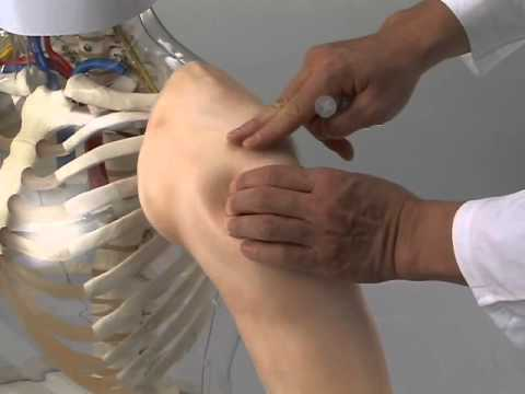 M155 Intramuscular Injection Model Of Upper Arm Muscles Youtube