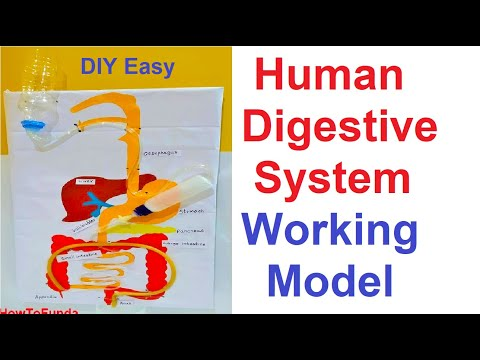 human digestive system working model for science fair project | DIY at home | howtofunda