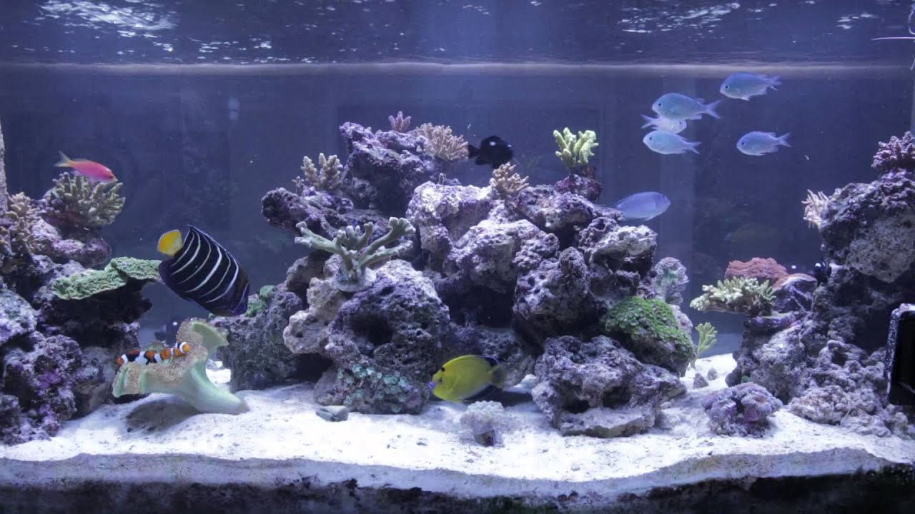 Reef Tank Aquascape - YouTube