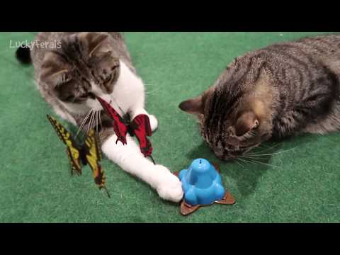 OurPets Whirling Wiggler Cat Toy Review - Cats Playing With Their New Toy