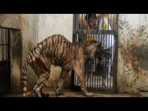 They Call This The' Zoo Of Death 'And Here's Exactly Why It Needs To Be Shut Down ...OMG