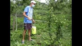 видео Тля на яблоне – что делать, или как бороться с тлей на яблоневом дереве