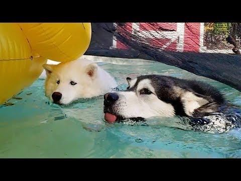Cute Dogs   Tonka & Monroe's Morning Adventure Vlog
