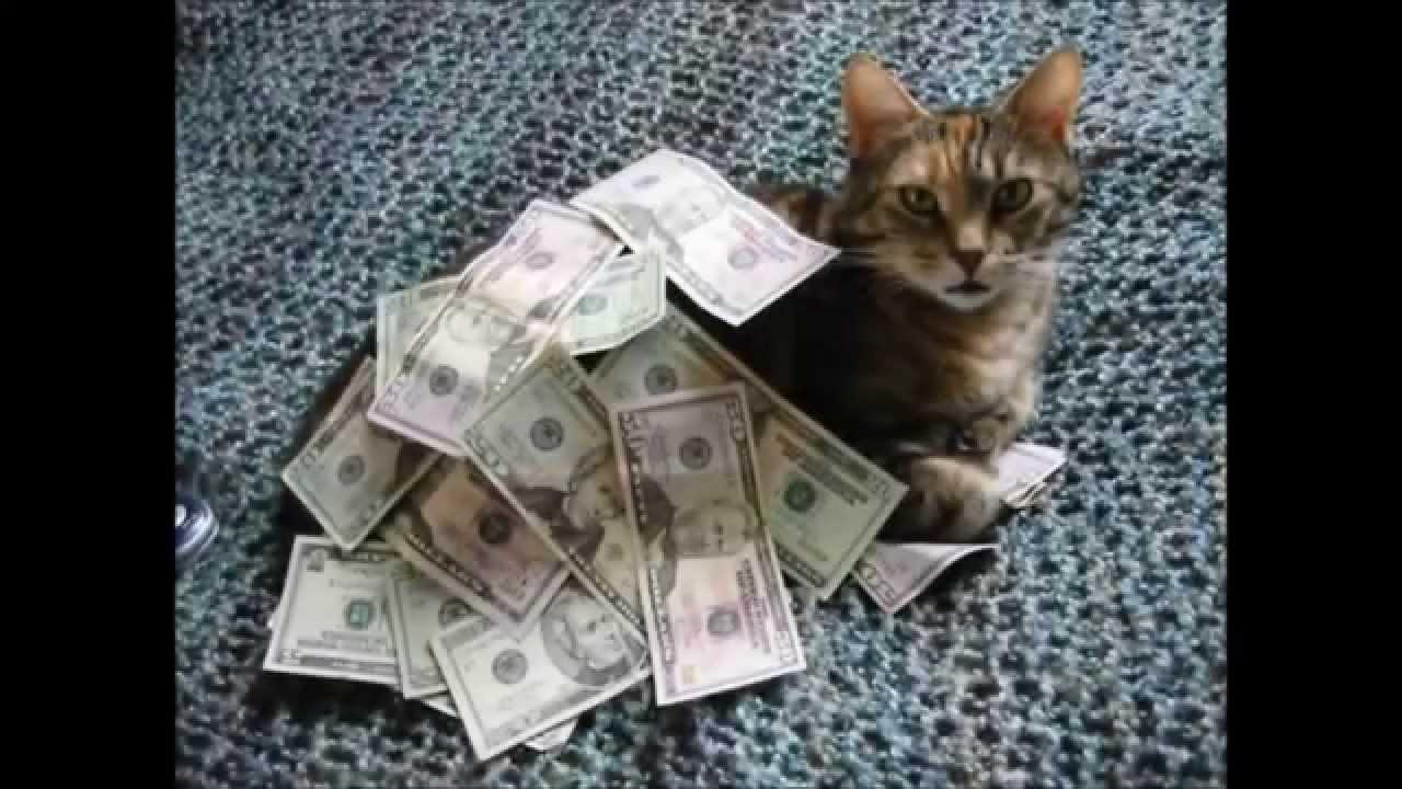 Игровой автомат Cats and Cash (Кошки И Деньги) Игровой автомат Beetle Mania Deluxe (Жуки Делюкс) Игровой автомат Ramses 2 (Рамзес 2).