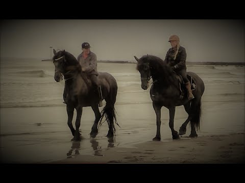 Historic Runnymede Farm Friesian's on the beach and in the surf, Hampton NH.