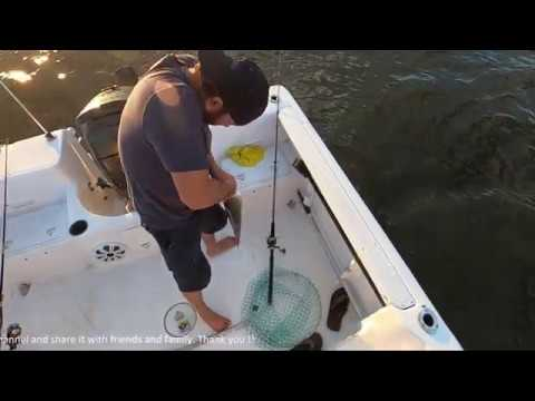 Rock Fishing | Striped Bass | FK & Camera