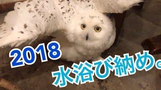 しーちゃん今年最後の水浴び!!