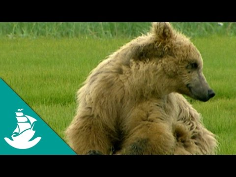 The Land of the Giant Bears - Now in Hight Quality! (Full Documentary)