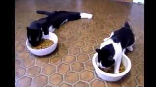 Прикольные коты 2015