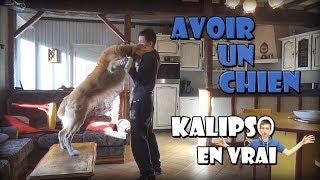 Kalipso En Vrai - Avoir un Chien