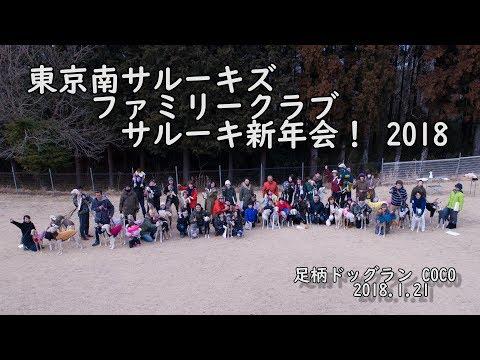 東京南サルーキズファミリークラブ  サルーキ新年会! 2018