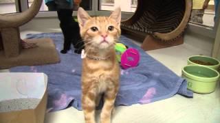Charleston Animal Society Hosts Record-breaking Adopt-a-thon