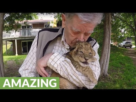 Decorated war hero's emotional cuddle with lions & cubs