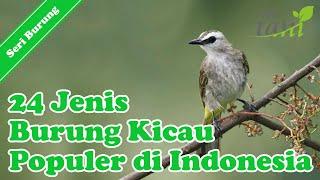 24 Jenis Burung Kicau Populer di Indonesia